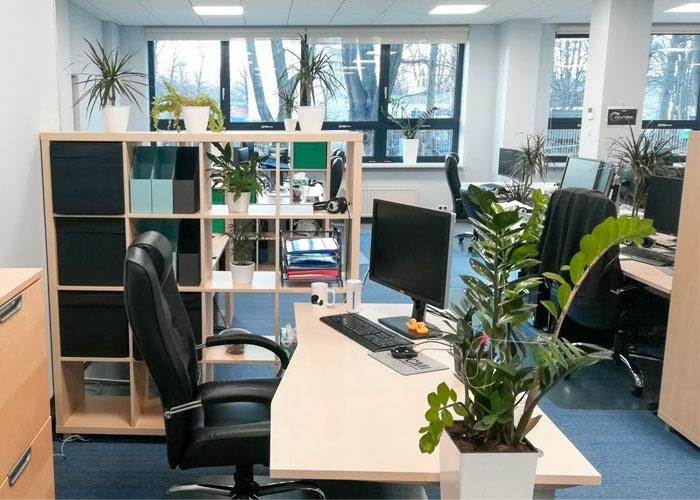Poland office, potted plants on desks