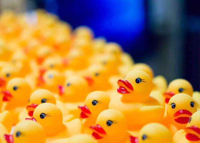 Poland team developers ducks